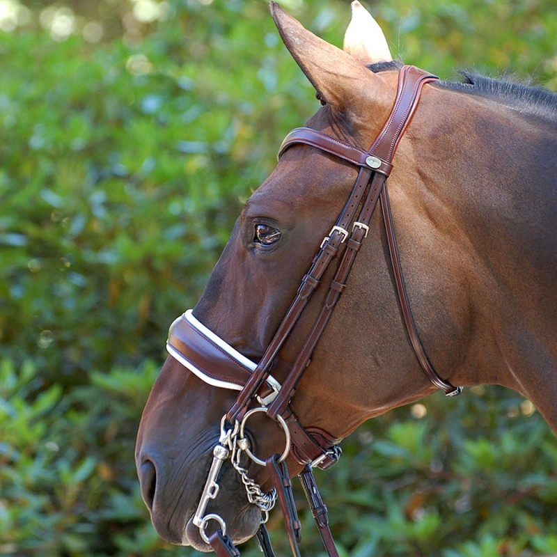 Dressage Collection Dy'on