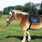 Selle NORTON CLUB cheval de trait