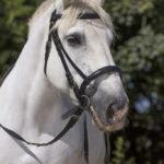 Bridon cheval de trait NORTON CLUB