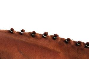Élastiques à crinière HIPPOTONIC