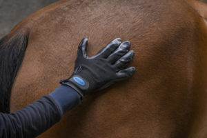 Gant de pansage anti-mue HIPPOTONIC