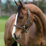 Licol Amigo Horseware
