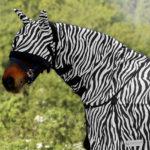Couvre-cou anti-mouche Zebra