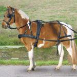 Harnais simple STAR poneys et shetty