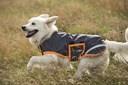 Couverture imperméable pour chien Amigo dog 100g